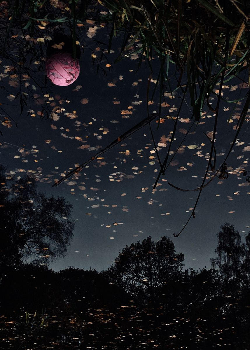 Pink Full Moon, from the series Pond (2019)