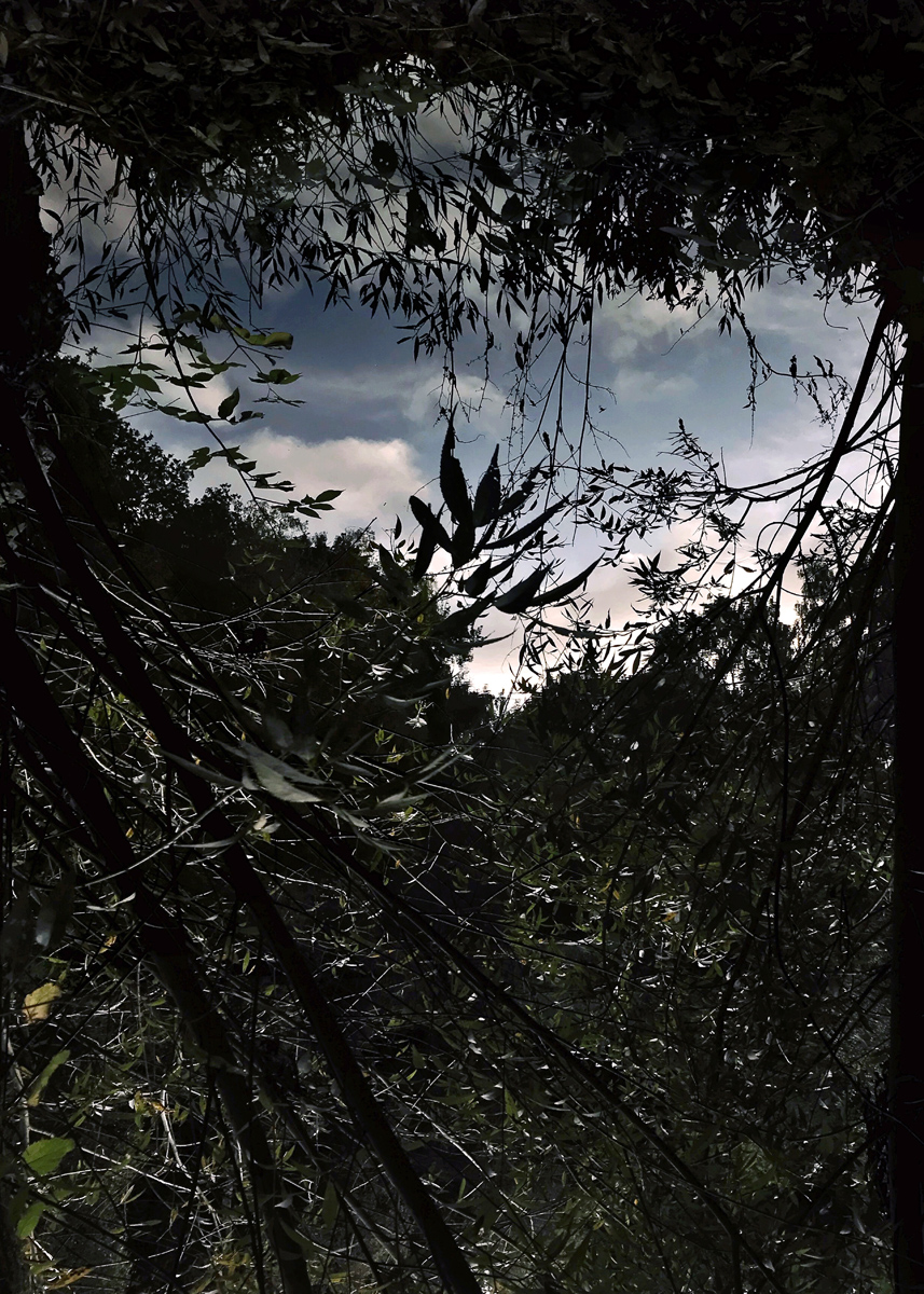 Pond in the Sky, from the series Pond (2019)