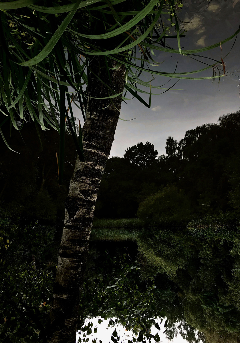 Palm, from the series Pond (2019)