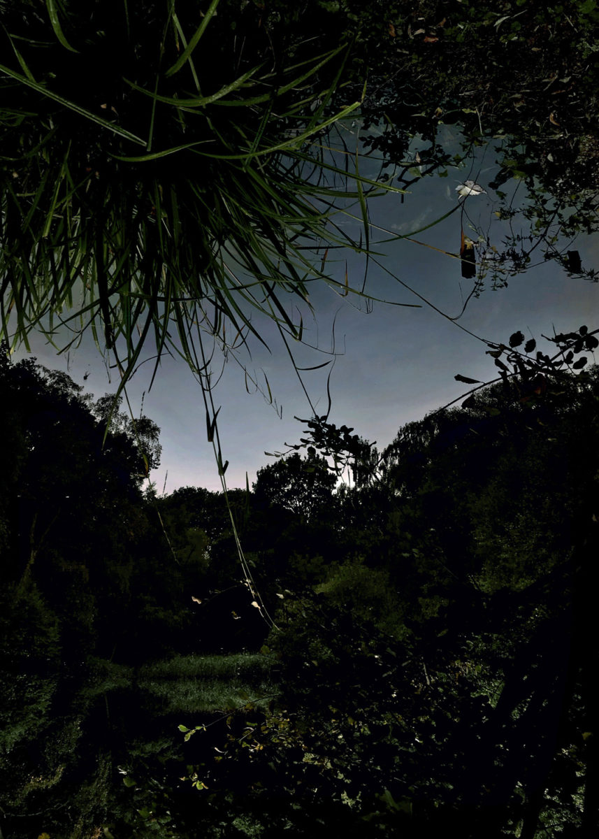 After Dark, from the series Pond (2019)