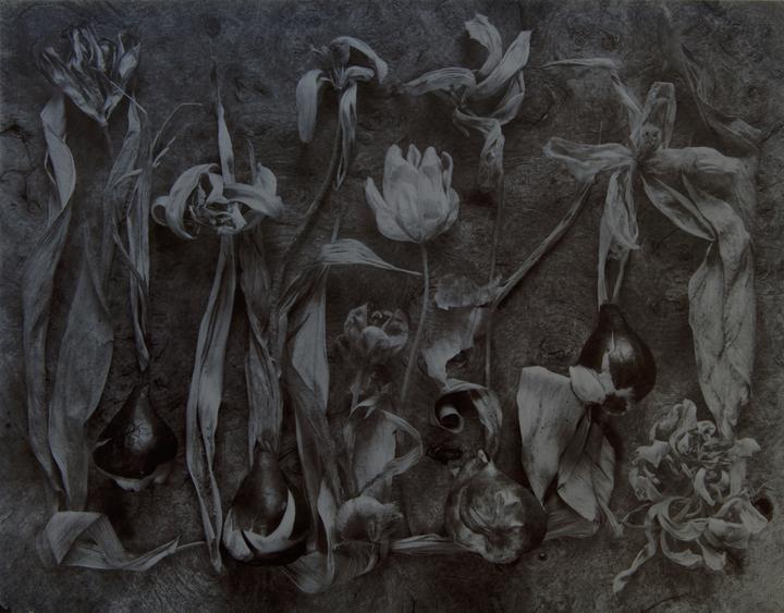 Tulips – Mutations No. 1 1991