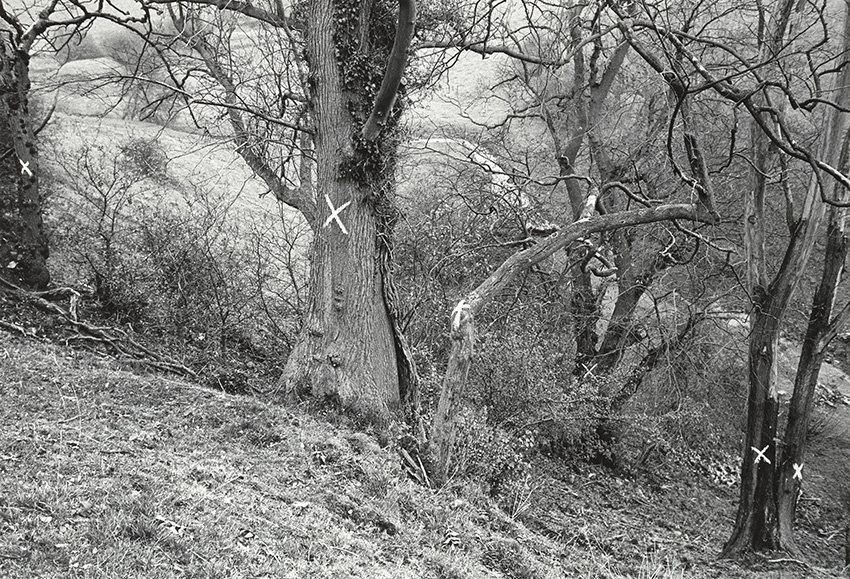 Elm Trees, Havenhill Dale (L of pair) (1982)