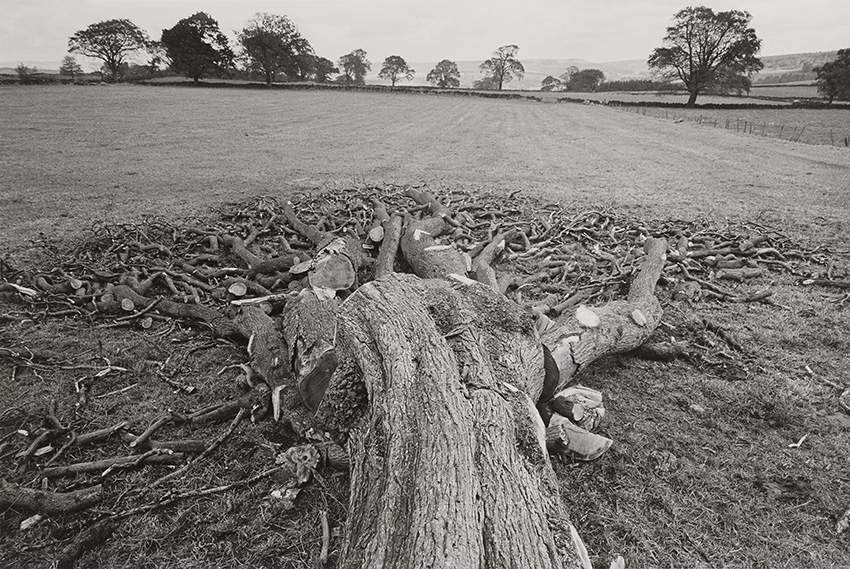 Felled Tree, Eldon Moor (1983)