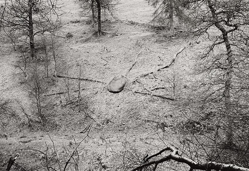 Stone and Fallen Trees, Gradbach (1989)
