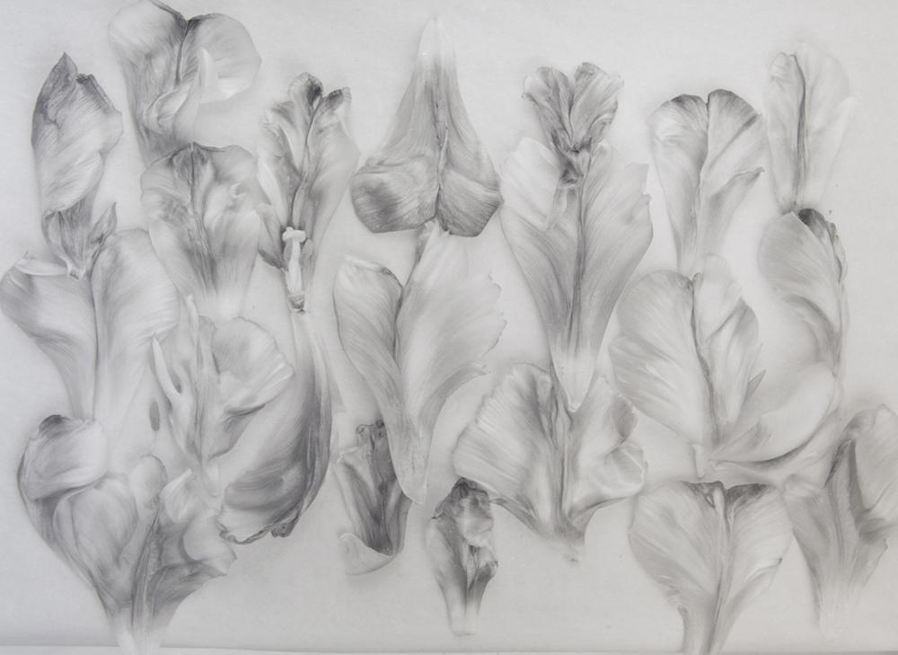 Tulipomania – John Blakemore